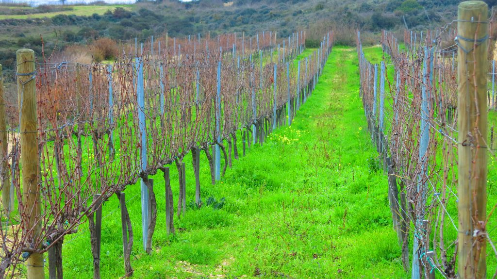 Pano Arodes vineyards